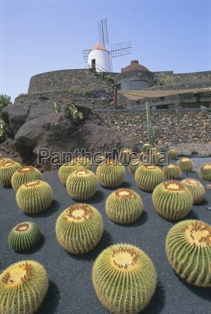jardin de cactus near guatiza lanzarote