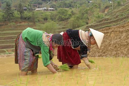 flower hmong ethnic group women working