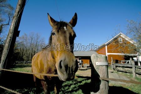 fahrt reisen farbe amerikanisch pferd ross