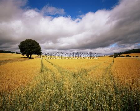 fields of cereals near avoch black