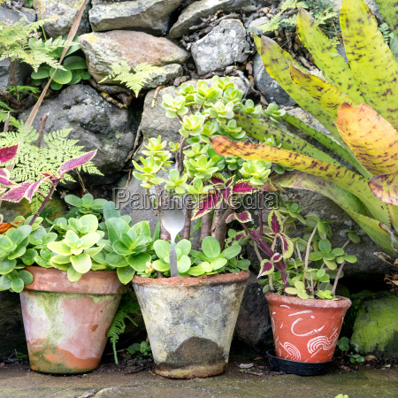 flowerpots with different plants