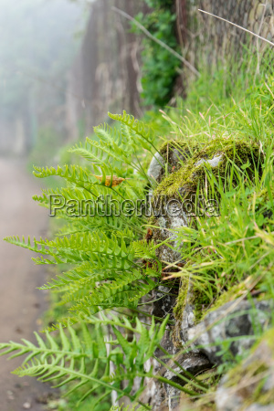 ferns in the fog at a
