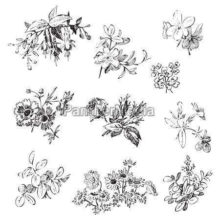 wiesenblumen und blattsatzvektor lokalisiert auf weiss