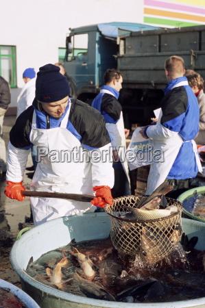 hersteller fischerei aus lebenden karpfen aus
