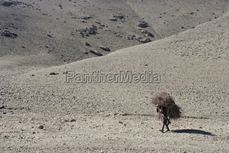 woman carrying firewood on the annapurna