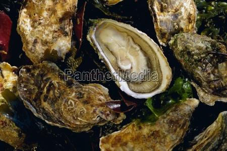 huitres fines de claires oysters ile