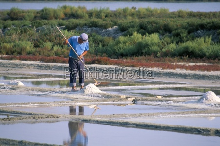 collecting salt in the salt pans