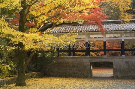 gingko tree garden of nanzenji temple