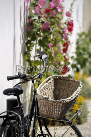 bicycle with basket and hollyhocks ars