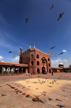 pigeons feed on grain scattered on