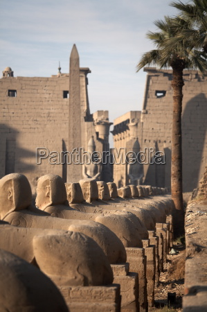 avenue of the sphinxes leading to