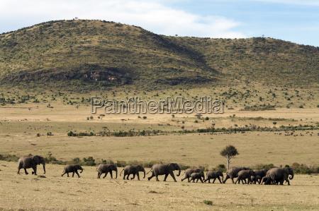 fahrt reisen elefant kenia horizontal outdoor