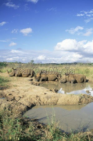 fahrt reisen umwelt farbe tier afrika