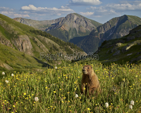 paseo viaje color americano animal mamifero