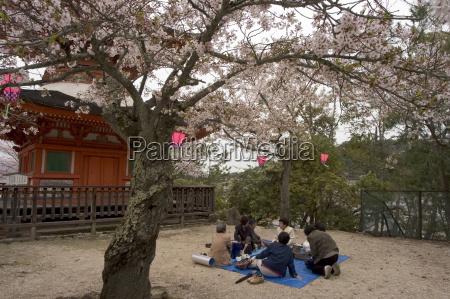 pagoda at itsukushima jinja shrine spring