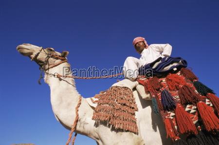 bedouin riding camel sinai egypt north