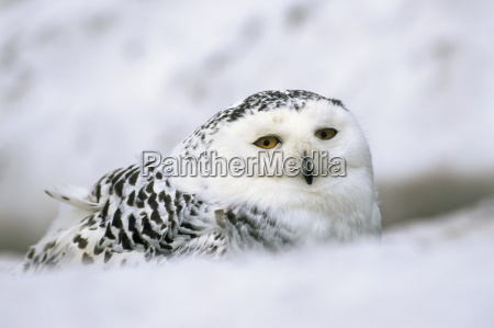 fahrt reisen winter tier vogel wildlife