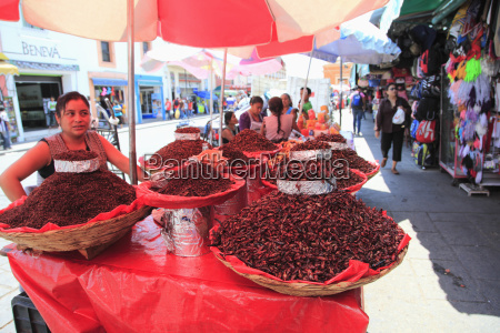 vendor selling chapulines fried grasshoppers oaxaca