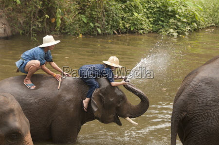 elephant conservation center lampang thailand southeast