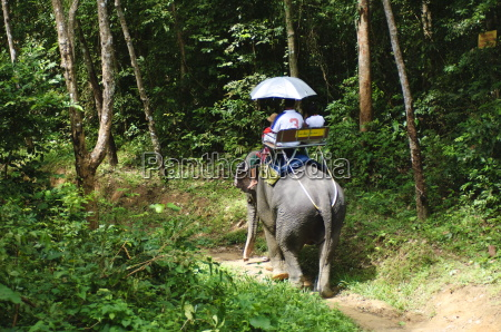 riding elephants in the chalong highlands