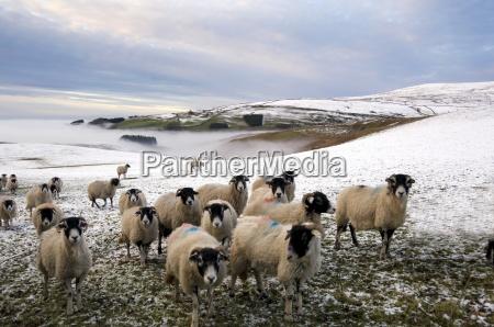 farbe winter wolke feld europid kaukasisch