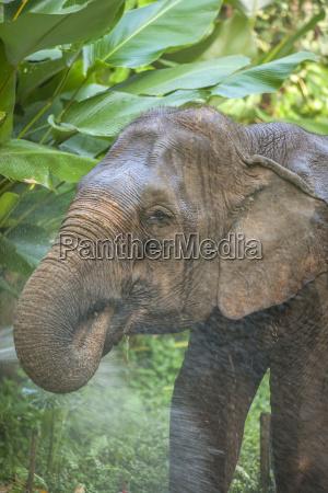 elephant golden triangle northern thailand thailand