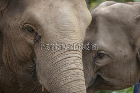 elephants golden triangle thailand southeast asia