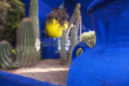 cactus garden in the jardin majorelle