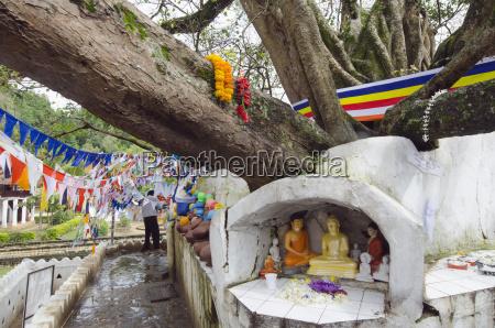 shrine on a bodhi tree unesco