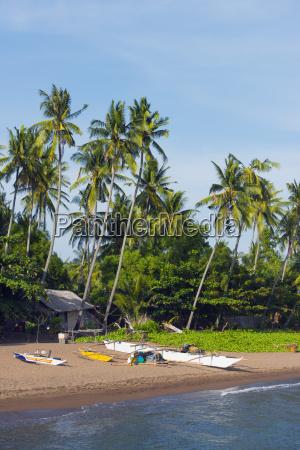 apo island cebu the visayas philippines