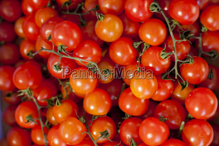 tomatoes for sale at the sunday