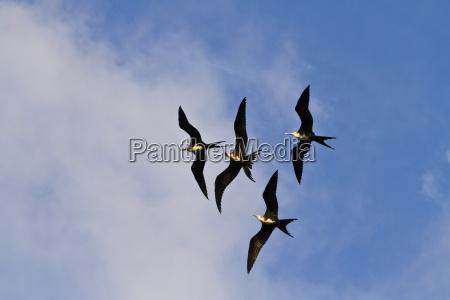 fahrt reisen farbe tier vogel wild