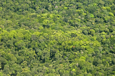 aerial view of pristine rainforest canopy