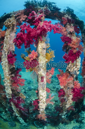 pink purple soft coral growing on