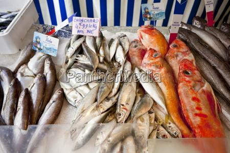 seafood for sale at market place