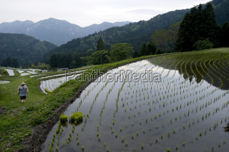 farmer tending to rice paddy terraces