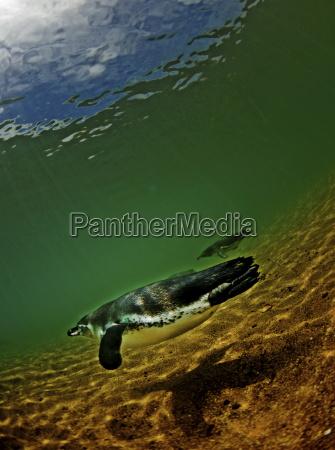 fahrt reisen tiere pinguine voegel unterwasser