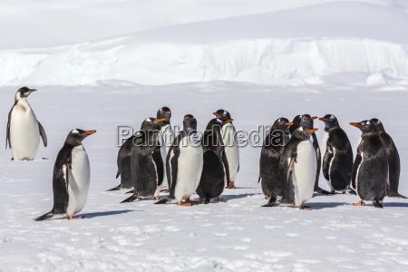 fahrt reisen farbe vogel antarktis horizontal