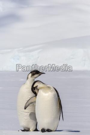 fahrt reisen farbe vogel antarktis pinguin