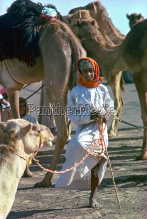 ein junger kameljunge der ein arabisches