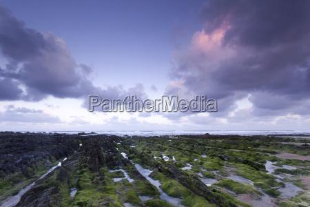 seaweed covered rocks at dawn in