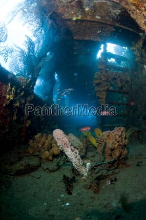 korallenwachstum im wrack des lesleen m