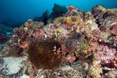 reef scene at nalusuan marine sanctuary