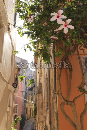 narrow street and hibiscus flowers old