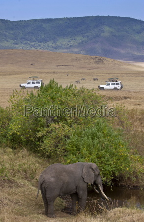 elephant feeding in ngoro ngoro crater