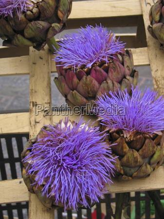 artichokes for sale in a fruit