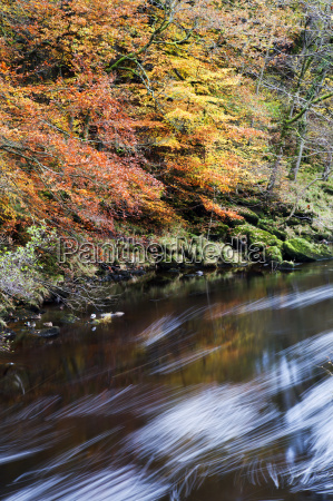 autumn colours by the river wharfe