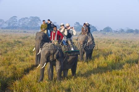 tourists on elephants kaziranga national park