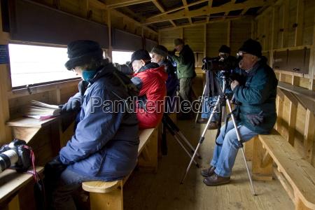 birdwatchers inside bird hide watch migrating