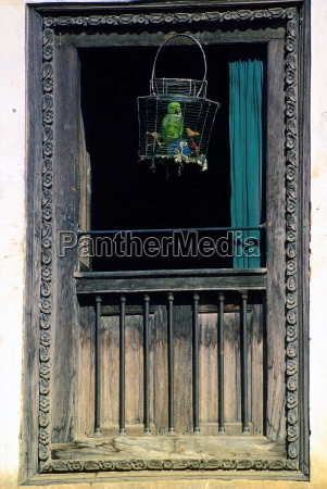 caged parrot in window patan nepal
